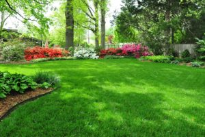 Trugreen Reviews the Top Spring Lawn Care Tips