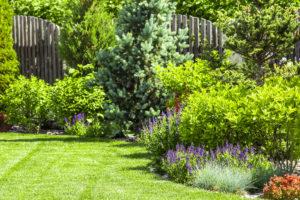 Design Tips for your Garden
