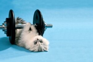 Feline Fitness 101: 7 Ways to Get Your Lazy Cat Moving
